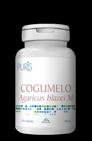 Cogumelo Agaricus blazei M.
